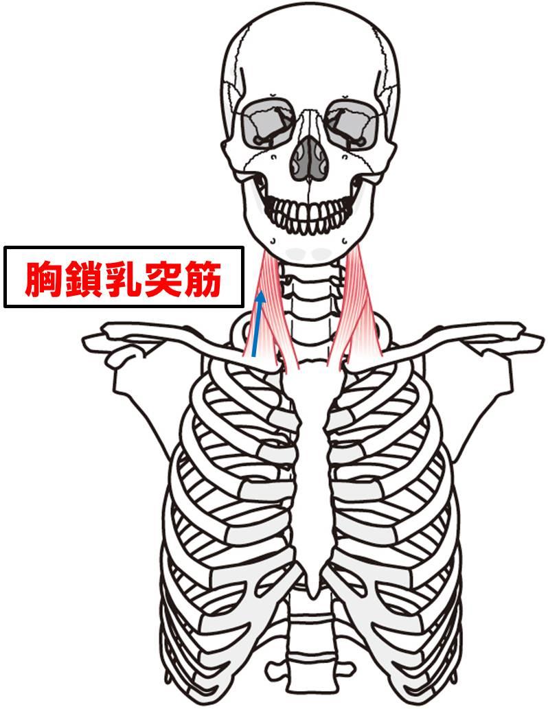 f:id:kigyou-pt:20210312081237j:plain