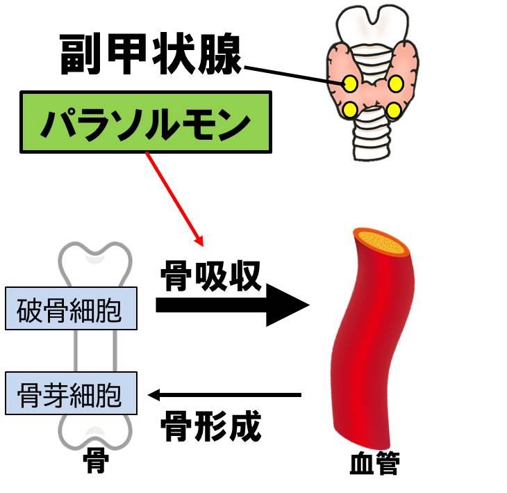 f:id:kigyou-pt:20210514083012j:plain