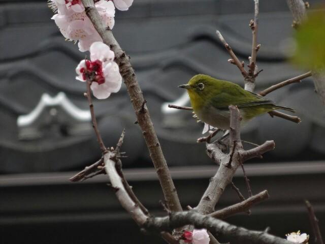 f:id:kiha-gojusan-hyakusan:20160413134731j:image