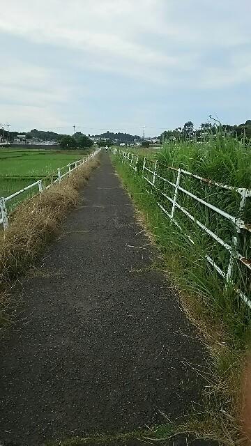 f:id:kiha-gojusan-hyakusan:20160627082655j:image