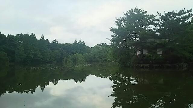 f:id:kiha-gojusan-hyakusan:20160715221847j:image
