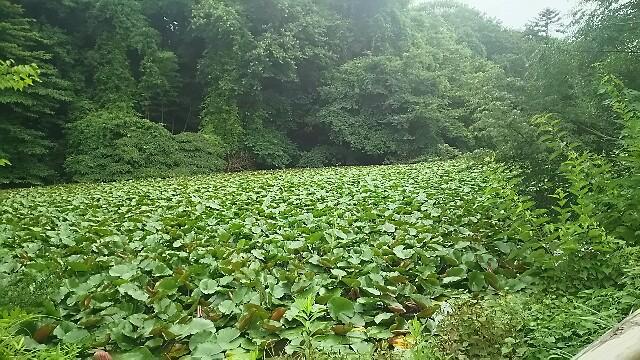 f:id:kiha-gojusan-hyakusan:20160715222022j:image