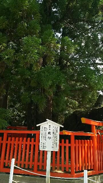 f:id:kiha-gojusan-hyakusan:20160805143547j:image