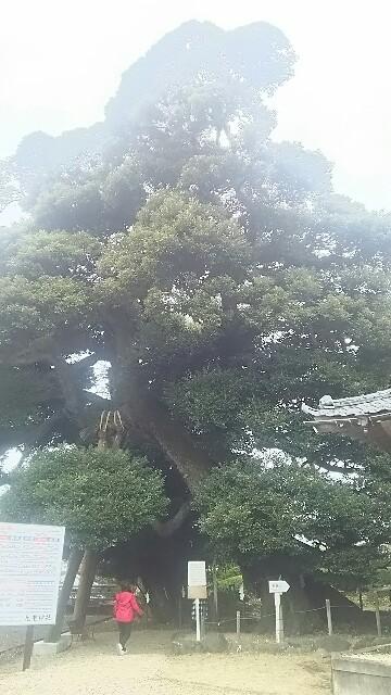 f:id:kiha-gojusan-hyakusan:20161127224718j:image