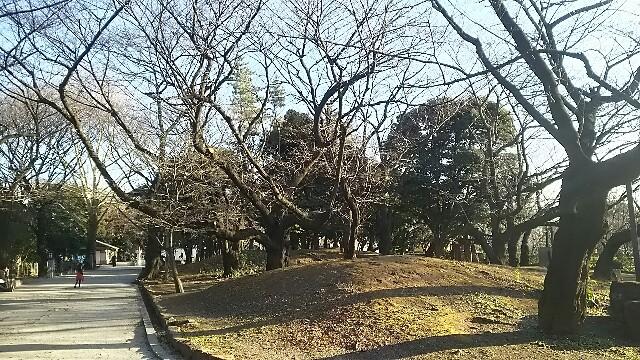 f:id:kiha-gojusan-hyakusan:20161225173131j:image