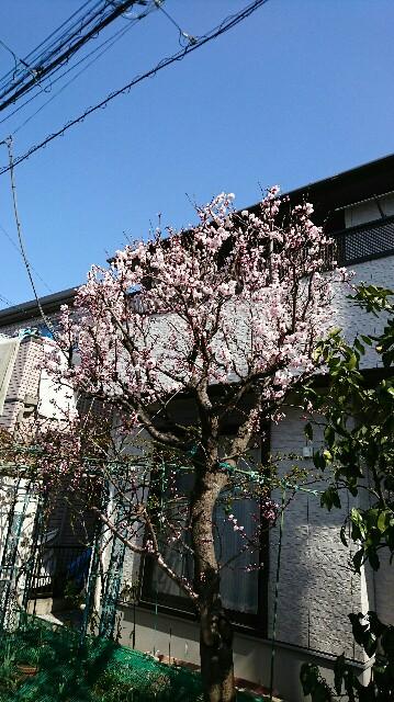 f:id:kiha-gojusan-hyakusan:20170319142921j:image