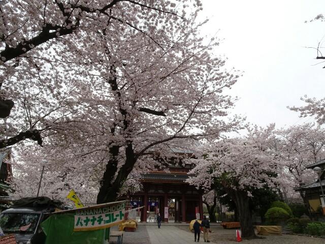 f:id:kiha-gojusan-hyakusan:20170418010647j:image