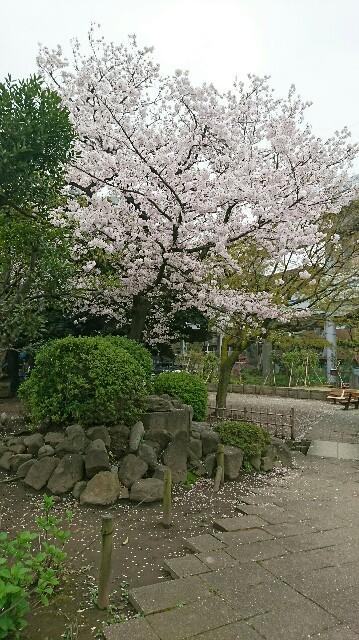 f:id:kiha-gojusan-hyakusan:20170418232609j:image