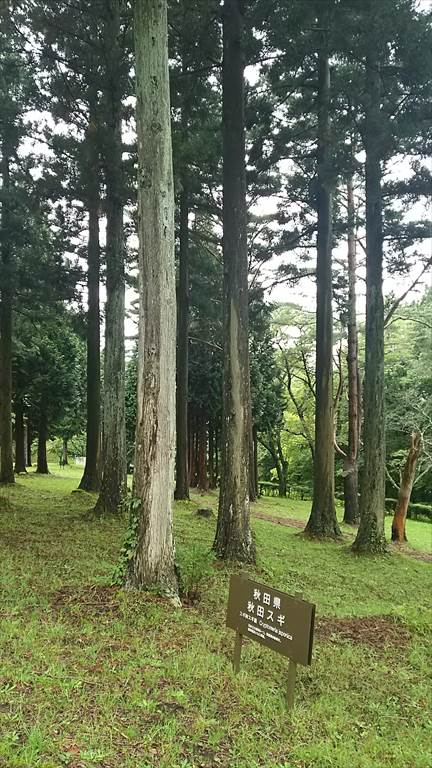 f:id:kiha-gojusan-hyakusan:20170607233101j:plain
