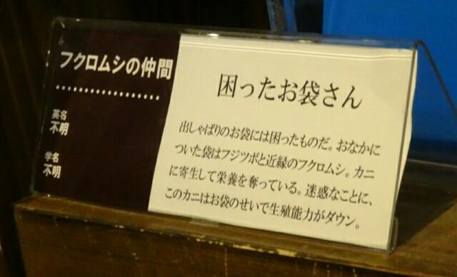 f:id:kiha-gojusan-hyakusan:20170722000223j:image