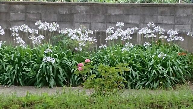f:id:kiha-gojusan-hyakusan:20170722112615j:image