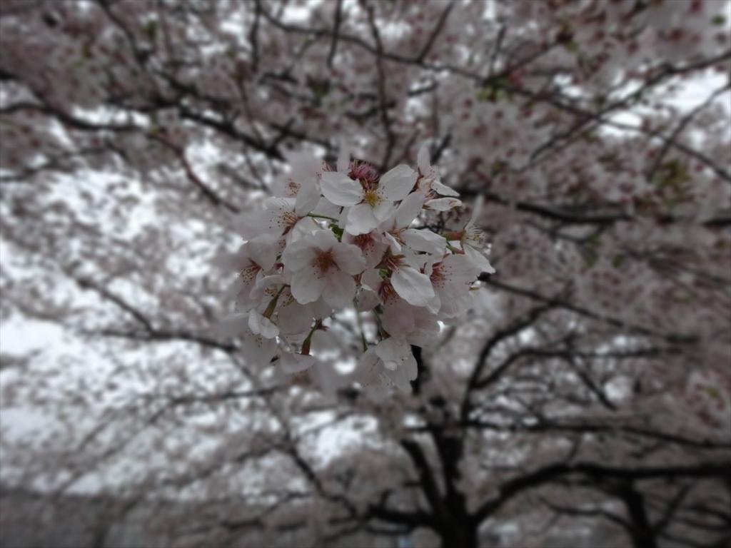 f:id:kiha-gojusan-hyakusan:20170808013040j:plain
