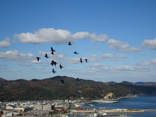f:id:kiha-gojusan-hyakusan:20171209215936j:image