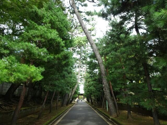f:id:kiha-gojusan-hyakusan:20181015044055j:image