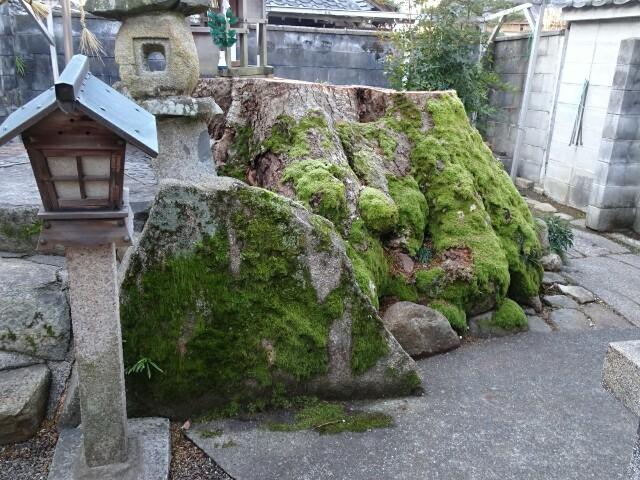 f:id:kiha-gojusan-hyakusan:20190313183951j:image