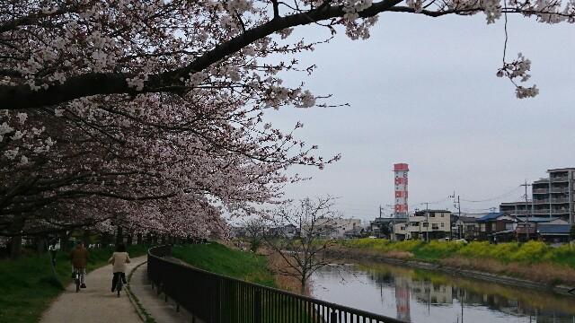 f:id:kiha-gojusan-hyakusan:20190330233106j:image