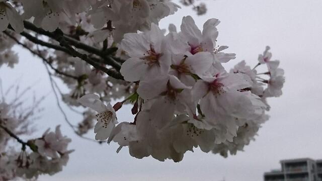 f:id:kiha-gojusan-hyakusan:20190330233540j:image