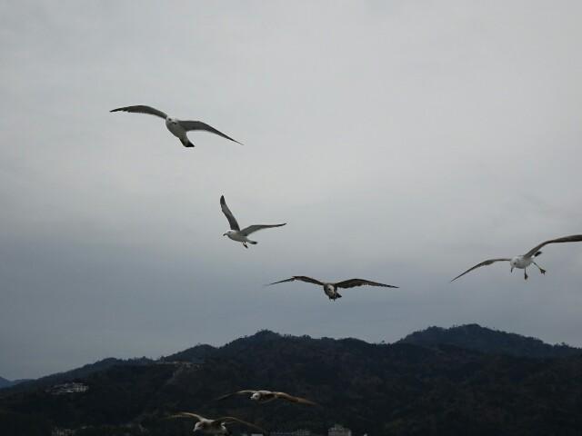 f:id:kiha-gojusan-hyakusan:20190406042417j:image