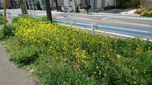 f:id:kiha-gojusan-hyakusan:20190408014817j:image