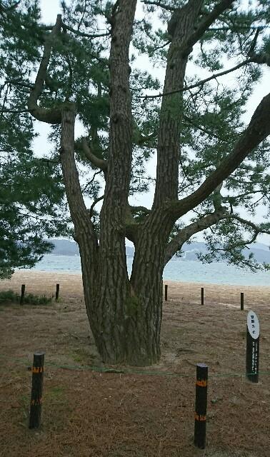 f:id:kiha-gojusan-hyakusan:20190410233152j:image