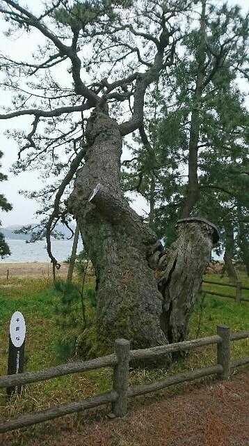 f:id:kiha-gojusan-hyakusan:20190410233226j:image