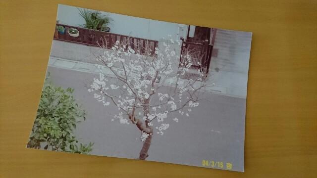 f:id:kiha-gojusan-hyakusan:20190503233231j:image