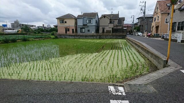 f:id:kiha-gojusan-hyakusan:20190624211445j:image