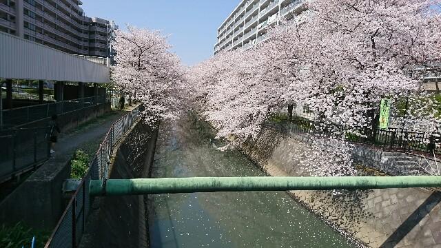 f:id:kiha-gojusan-hyakusan:20190630012815j:image