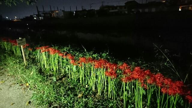 f:id:kiha-gojusan-hyakusan:20190930020621j:image