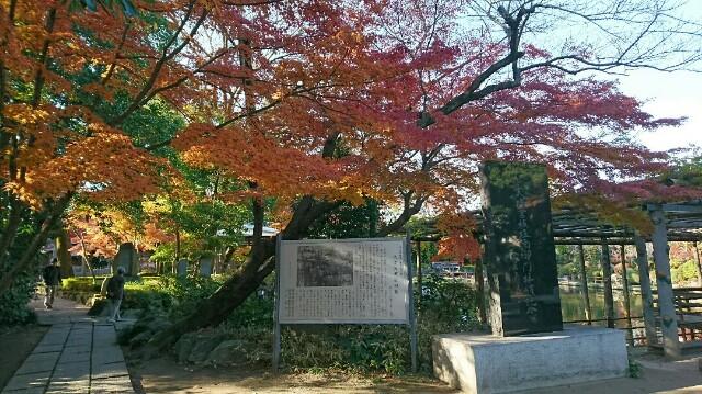 f:id:kiha-gojusan-hyakusan:20191208205503j:image