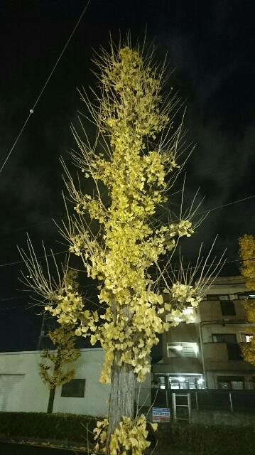 f:id:kiha-gojusan-hyakusan:20191213000114j:image