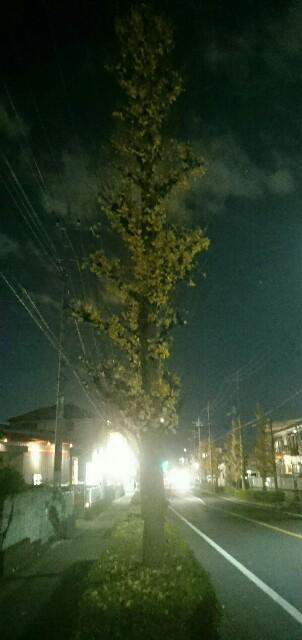 f:id:kiha-gojusan-hyakusan:20191213000128j:image