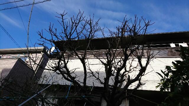 f:id:kiha-gojusan-hyakusan:20200205023744j:image