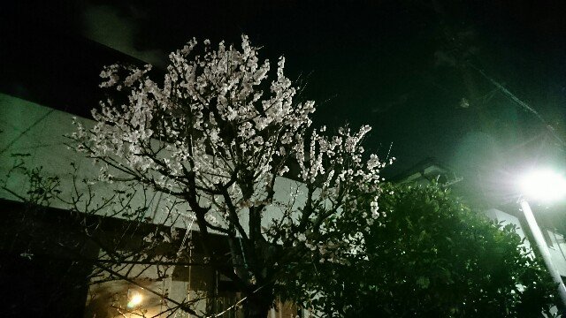 f:id:kiha-gojusan-hyakusan:20200312023810j:image