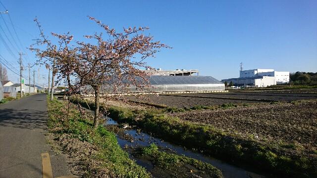 f:id:kiha-gojusan-hyakusan:20200321033645j:image