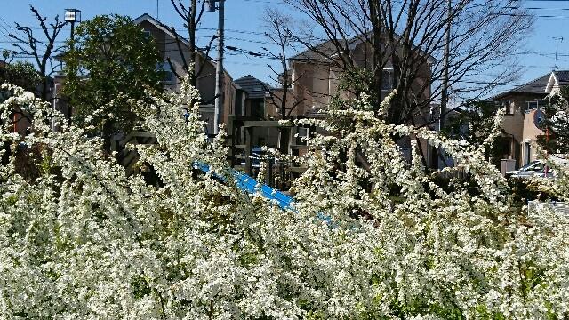f:id:kiha-gojusan-hyakusan:20200323200613j:image