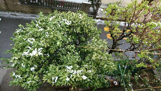 f:id:kiha-gojusan-hyakusan:20200329202837j:image
