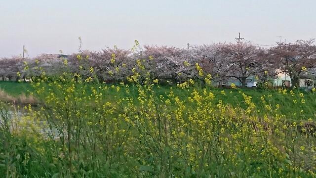 f:id:kiha-gojusan-hyakusan:20200405141727j:image