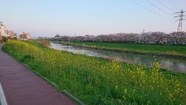 f:id:kiha-gojusan-hyakusan:20200405141924j:image