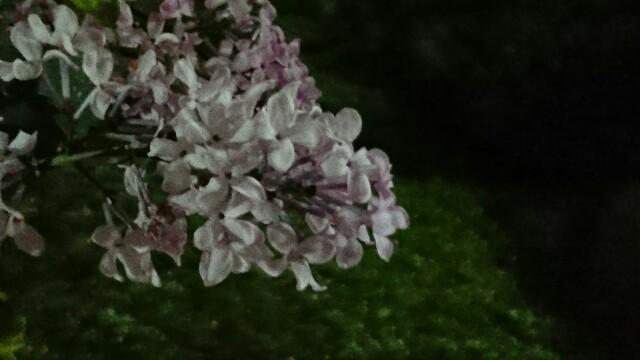 f:id:kiha-gojusan-hyakusan:20200415224900j:image