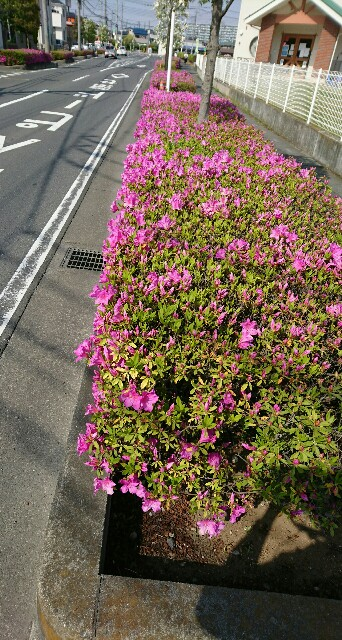 f:id:kiha-gojusan-hyakusan:20200426183723j:image