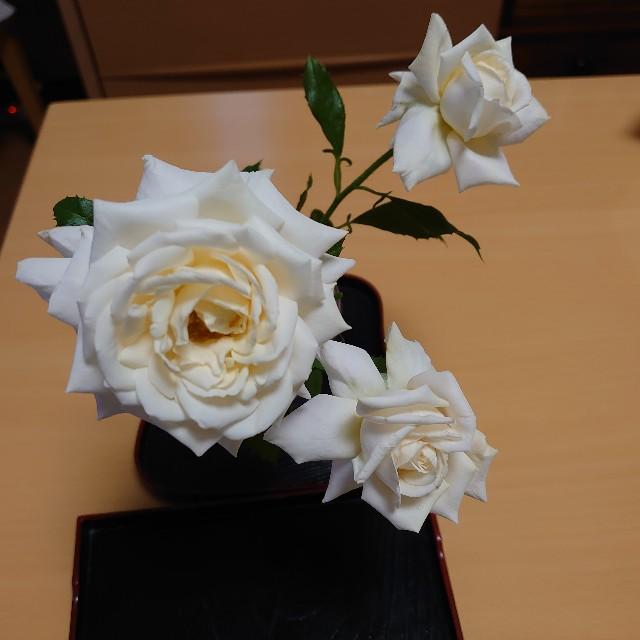 f:id:kiha-gojusan-hyakusan:20200520165320j:image