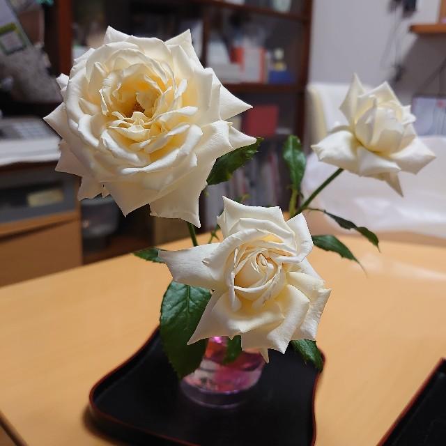 f:id:kiha-gojusan-hyakusan:20200520192934j:image