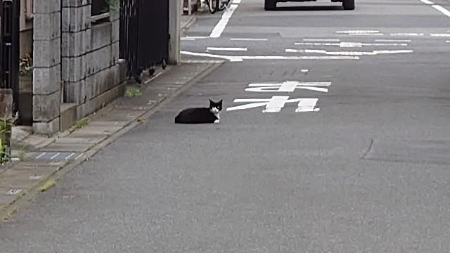 f:id:kiha-gojusan-hyakusan:20200704210233j:image