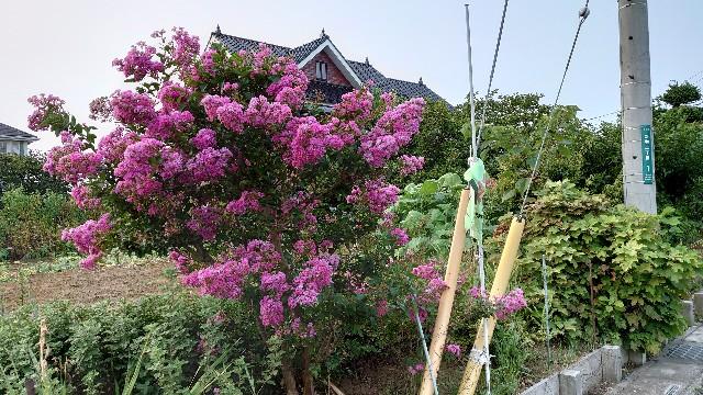 f:id:kiha-gojusan-hyakusan:20200809010814j:image