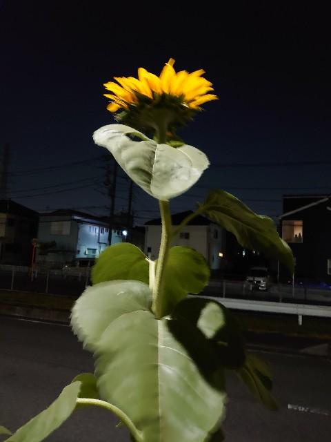 f:id:kiha-gojusan-hyakusan:20200829211337j:image