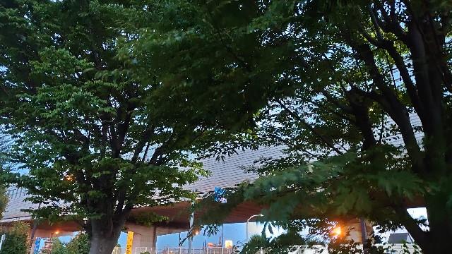 f:id:kiha-gojusan-hyakusan:20200830203726j:image