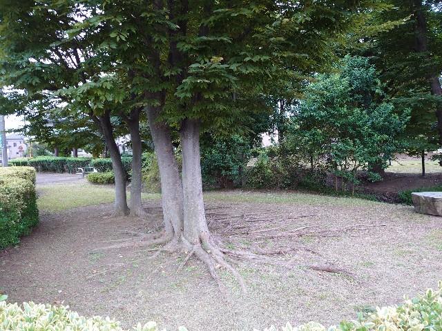 f:id:kiha-gojusan-hyakusan:20201008125849j:image
