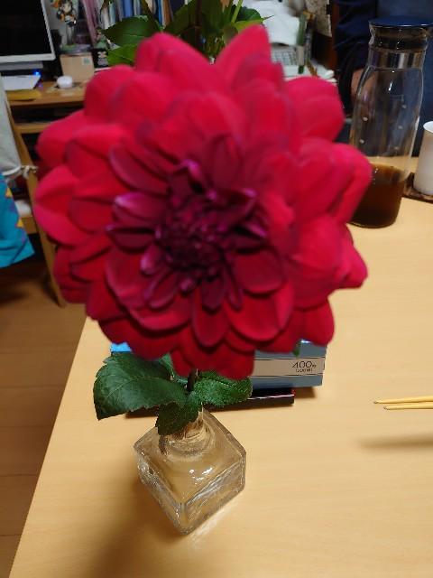 f:id:kiha-gojusan-hyakusan:20201022200319j:image