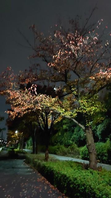 f:id:kiha-gojusan-hyakusan:20201102004711j:image